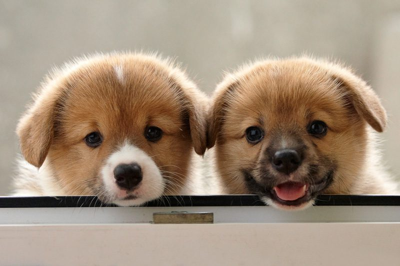 Скачать прикольные картинки про собак 38 фото
