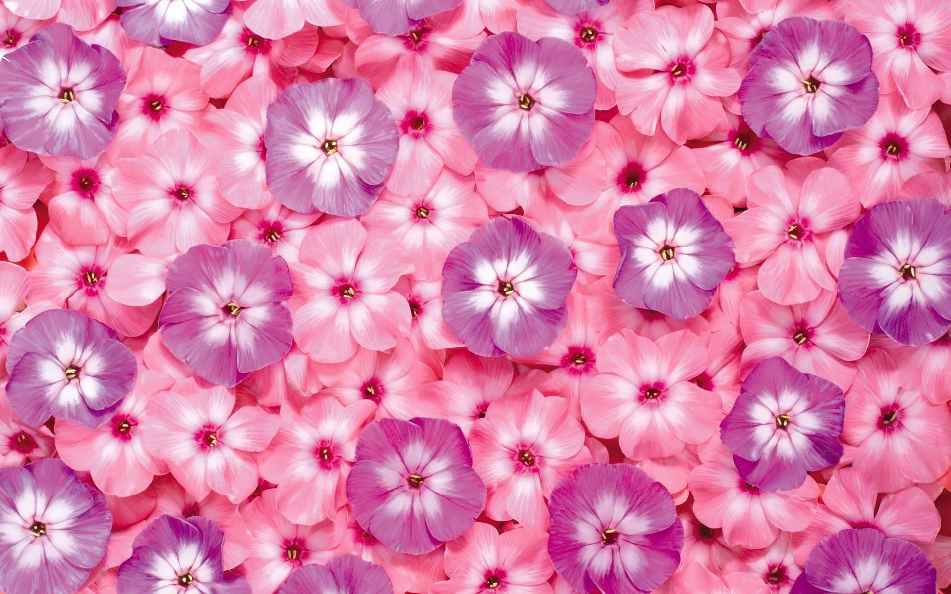 Фото на весь экран цветов