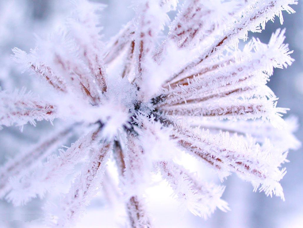 Картинки скачать бесплатно первым снегом картинки прикольные 1
