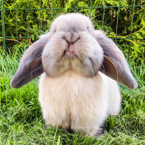Happy easter bunnies - 2 part 1