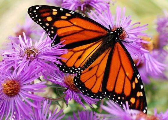 Цветы и бабочки картинки нарисованные  DreemPicscom