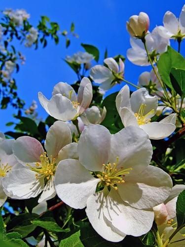 картинки красивые на телефон весна