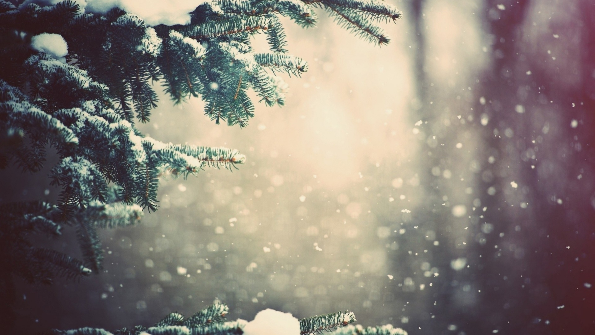 зимняя парк фото