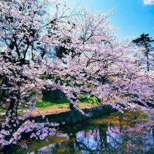 Красивые картинки на рабочий стол весна (35 фото)