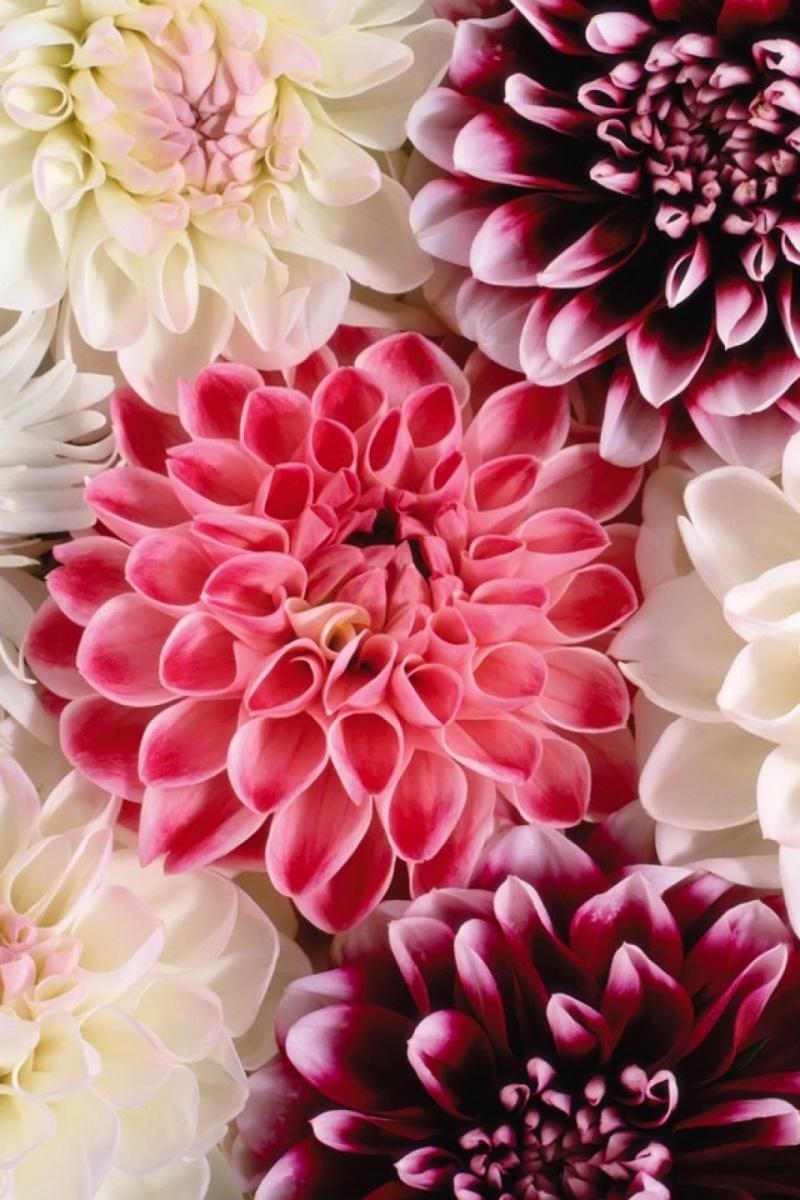 Живые обои на рабочий стол цветы скачать бесплатно