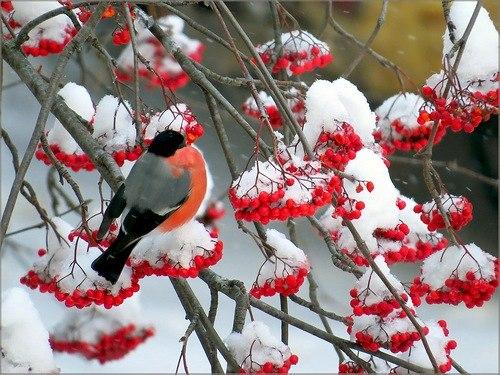 Красивые зимние картинки (35 фото) Прикольные картинки и юмор 11