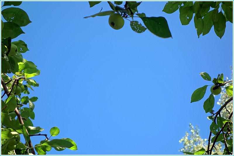 Лето лес картинки