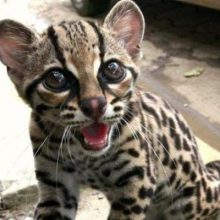 Картинки красивые котики (35 фото)