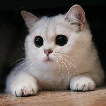 Фото кошек и скачать фото