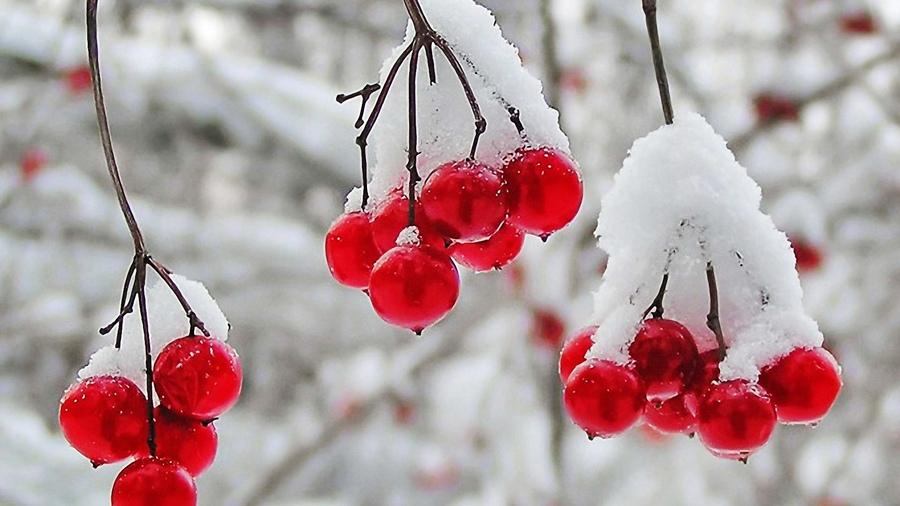 Фото зимний лес скачать