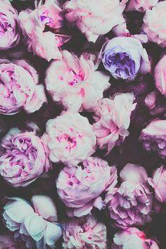 картинки на заставку телефона цветы