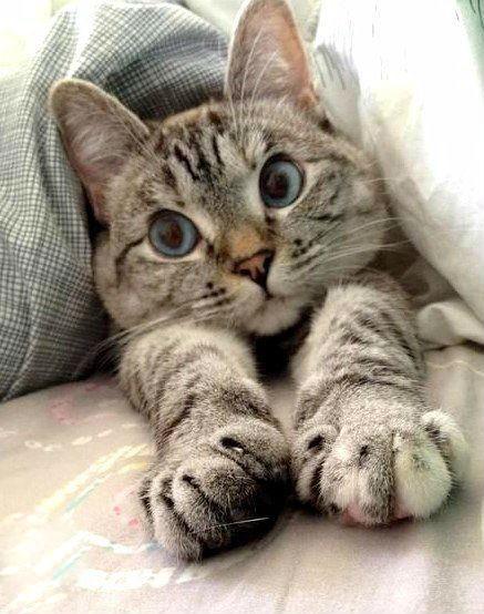 Вислоухих котиков и других няшных животных обои и картинки
