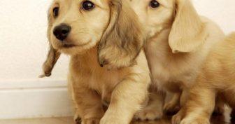 Картинки собачки (35 фото)
