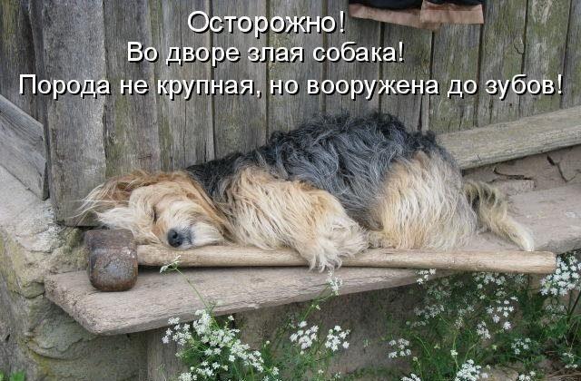 Очень смешные картинки с надписями 35 фото  Прикольные