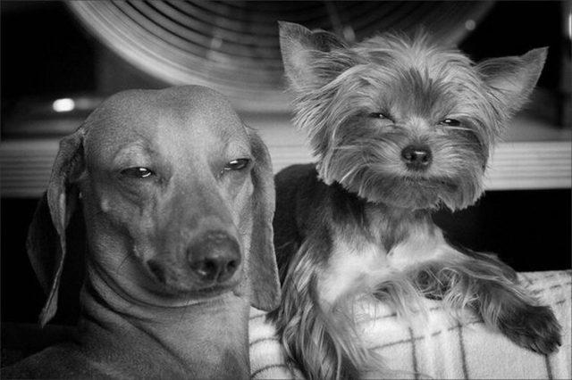 фото приколы собака улыбака
