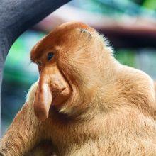 Скачать смешные картинки животных (35 фото)