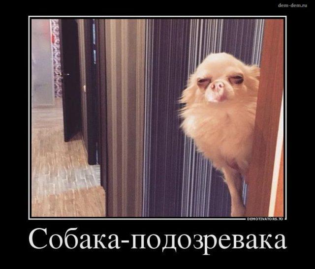 http://bipbap.ru/wp-content/uploads/2017/10/5japlziufzs-640x547.jpg