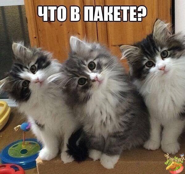котята. картинки с надписью