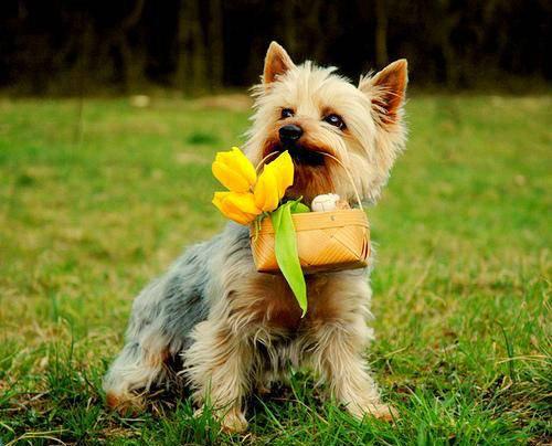 Собаки с цветами: фото и картинки собака с цветами, скачать