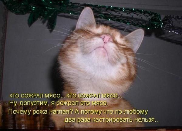 прикольные фото коты с надписями