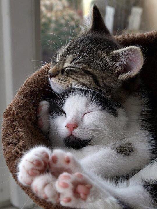 Скачать бесплатно картинки про котов