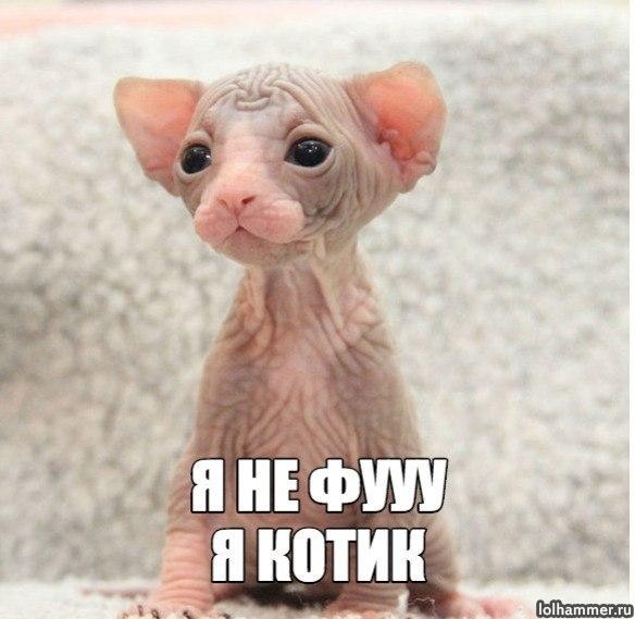 http://bipbap.ru/wp-content/uploads/2017/10/E_HGJqu0T2M.jpg