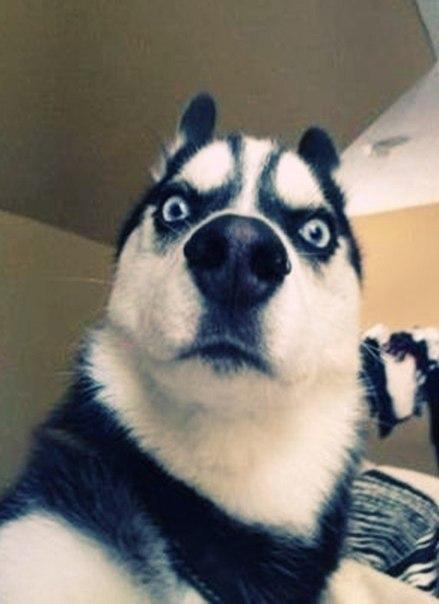 собака подозревака картинка