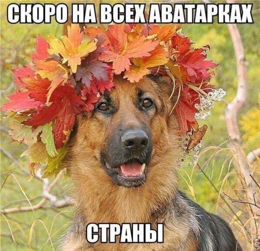 смешные картинки про осень