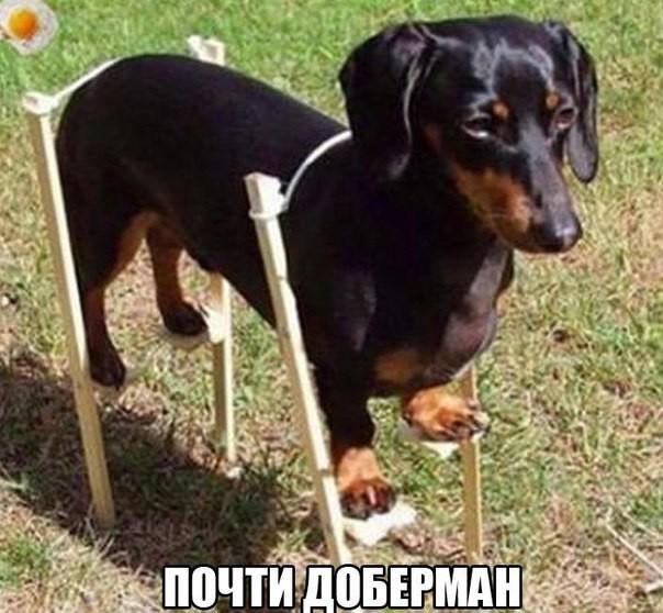 Очень смешные картинки с надписями (35 фото) • Прикольные ... Собака и Кошка