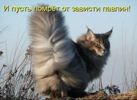 коты приколы картинки с надписями