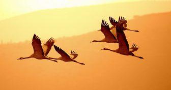 Картинки птицы осенью (35 фото)