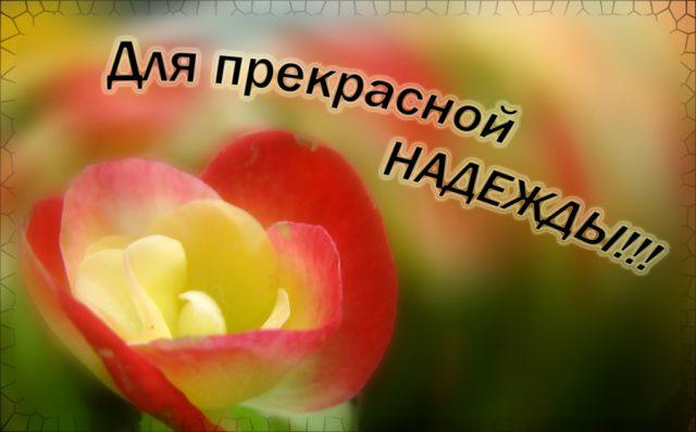 День самоуправления урок русского языка для учителей
