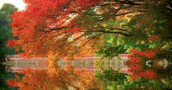 Картинки осенние деревья (30 фото)