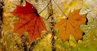 Картинки осень за окном (35 фото)