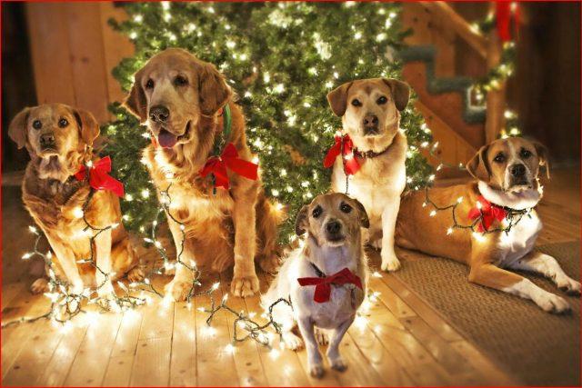 Прикольные картинки с собаками на рабочий стол 6