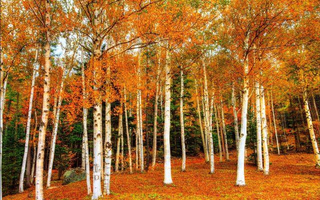 Осенняя дорога фото