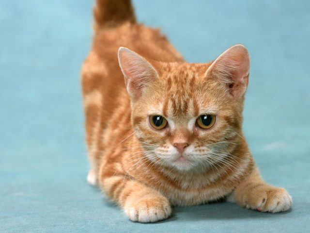Котенок милый картинка