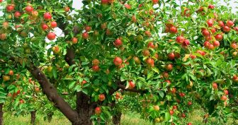 Картинки для детей яблоня (24 фото)