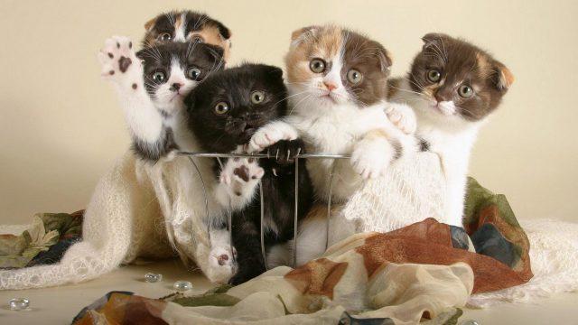 Милые котята скачать бесплатно