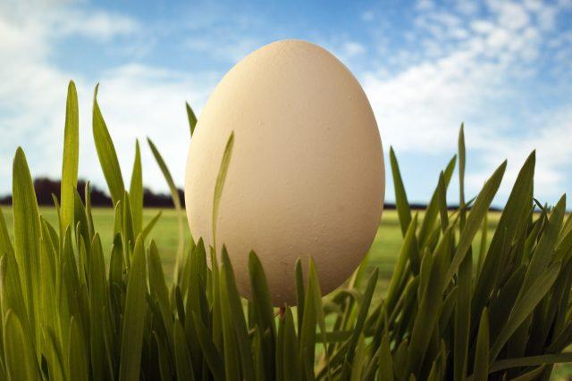 Яйцо и цыпленок картинки