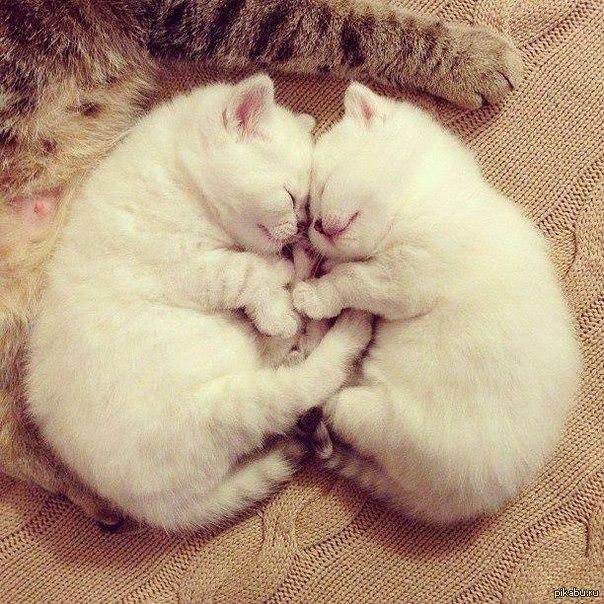 Картинки кошек и котят скачать