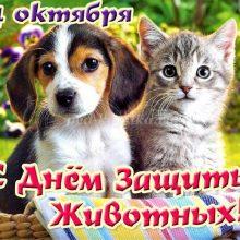 Картинки Всемирный день животных (35 фото)