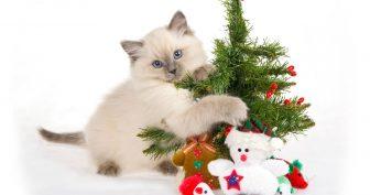 Картинки няшные котики (35 фото)