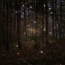 Картинки волшебный лес (35 фото)
