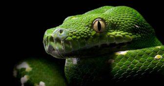 Картинки красивые змеи (35 фото)