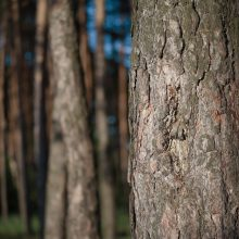 Картинки ствол дерева (35 фото)