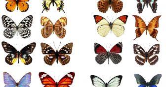 Картинки бабочки красивые нарисованные для распечатки (35 фото)
