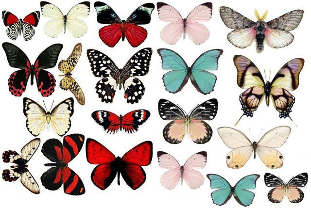 Бабочка нарисованная картинка