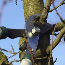 Обрезка вишни осенью для начинающих в картинках (7 фото)
