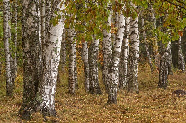 Осенние листья на траве фото